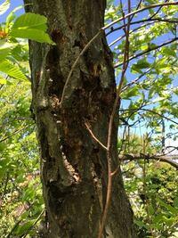 家の敷地の栗の木が虫に穴を開けられてます。 何にやられているか?何か良い対処方法はないでしょうか? また、近くに家があるので同じ様に穴だらけにならないか心配です。 詳しい方のご回答お願いします。