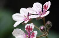 ご近所の庭に咲く花の名前が判りません。ご存知の方、教えて下さい。