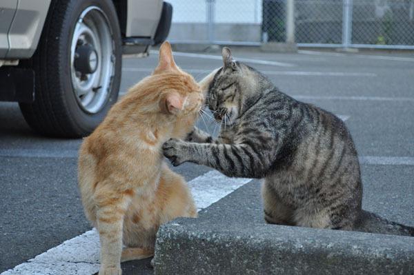 キジネコのワドりんちゃんと、茶トラ猫の、ちゅうた君が、なにやらケンカしてます ぼくは、おまえたち