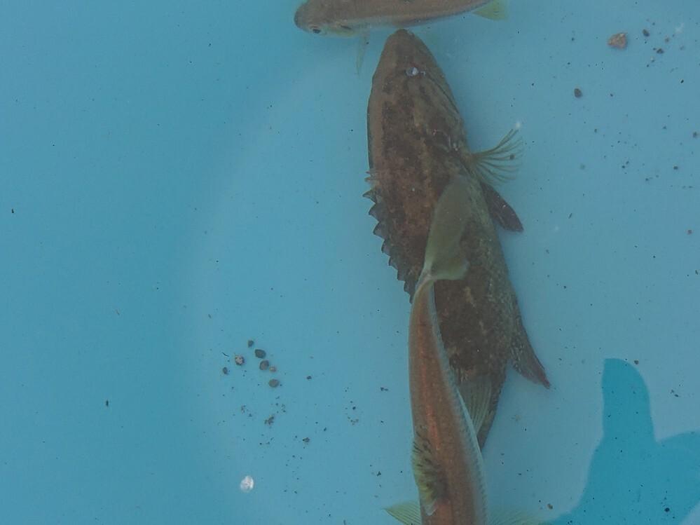 この魚はなんという魚ですか?