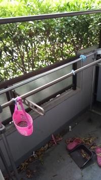 日当たりがあまり当たらないが南向きマンションの1階に住んでいます。(写真状態) ベランダでプランターを使っていちごを育てたいのですが、育つでしょうか?