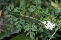 今日、北九州市で見た野の花です。名前をご存じの方、教えて下さい
