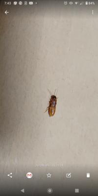 シロアリについて教えて下さい。 ここ2,3日でシロアリのような虫が5匹程度、発見しました。 この虫は、シロアリでしょうか? 昨日、家にバルサンを炊きましたが一度、業者に見てもらった方が いいのでしょうか...
