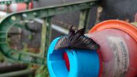 この蝶は珍しいですか? なんと言う蝶ですか?