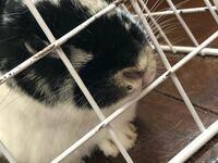 飼っているウサギの鼻の横あたりに、白い固形物ができていました。 写真見づらくて申し訳ありません。 何かの病気でしょうか?
