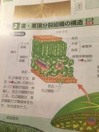 生物基礎  木部と道管、師部と師管の違いってあるのでしょうか?