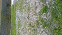 空き地に雑草隠しに蕎麦の種蒔きをしたいのですがばら撒きは可能でしょうか?食用ではなく、蕎麦の花畑にしたいのです 雑草がはえてます 広さは20坪、何キロの種が必要でしょうか?