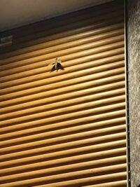 蛾のような昆虫についてです。先日マンションの壁にへばりついていたこちらの蛾のような昆虫の名称を教えていただけませんでしょうか? 羽根の形が飛行機みたいでかっこいいのですが、何か生き物というより何か玩...
