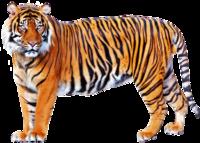 トラ VS ヒグマならどちらが一般的には強いとされますか?