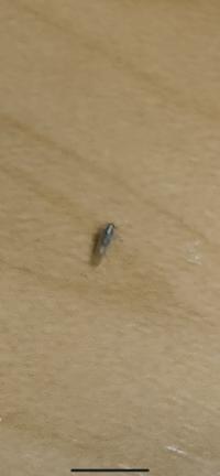 シロアリ?羽アリ? この虫が一月ほど前から定期的にマンション共用部に大量発生します。 どこからか家の中にも入ってきて、ひどい時は100匹ほど天井にでます。 電気のあるところではなく、 暗い廊下になぜか...