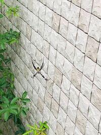 このクモを駆除するのは、かわいそうなのでどこか別の場所に移動させてあげたいのですが適した場所はどこがよろしいのでしょうか。教えてください。ちなみに何ていうクモなのでしょうか。