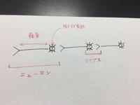 高校生物。軸索、樹状突起、ニューロン、シナプス。  これらが何を指しているか、はっきりしないので確認させてください。  添付のとおりで正しいでしょうか?  よろしくお願い申し上げま す。