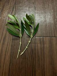 オリーブの挿し木についてです。 芯止めをしていない、オリーブの木を挿し木した場合、  年月をかければ、枝分かれするのでしょうか?  それとも上に伸びるだけなのでしょうか?  写真のような挿し穂の場合です。