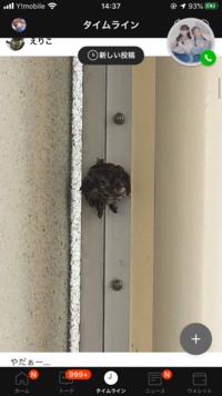 ベランダに蜂の巣が出来てしまいました...どうすればいいでしょうか?業者さんに駆除してもらえばいいのでしょうか? それと蜂の種類分かる方がいれば、教えてくださると有難いです。
