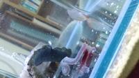 至急!ピラニアナッテリーの餌のやり方について 最近釣り餌の余りの青イソメを1日1匹ペースで与えています。餌は一日でそれだけです。まだ7、8センチ程度の個体で、1匹食べるとお腹が膨れます 。入れるとすぐ食べ、数秒で食べてしまうのですがずっと食べていない腹ペコからいきなりお腹が膨らむほど食べさせて体悪いかなと思いました。分けて与えた方がいいのでしょうか?