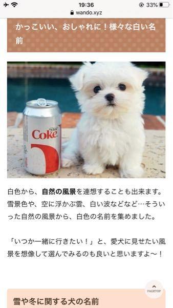 この犬の犬種は?