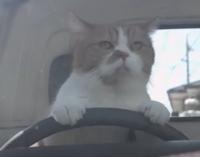 この方はシートベルト着用違反にならないのでしょうか。