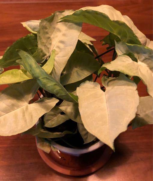 観葉植物の名前を教えてください!