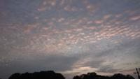 これはいわし雲ですか?