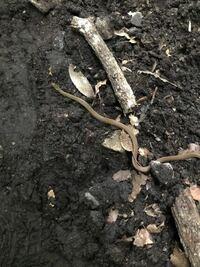 写真わかりにくくてすみません。 下山中に見かけたヘビなんですが、これは何という種類のヘビでしょうか?
