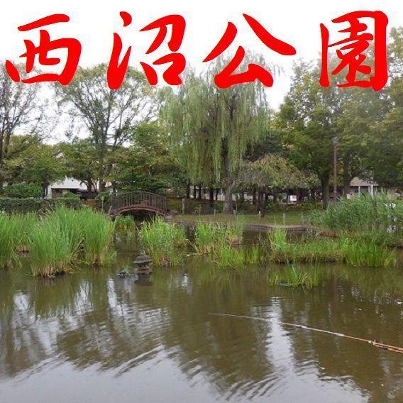 画像は、東京都足立区東和にある西沼公園です。 ・ 本日の早朝6時過ぎに画像を取得いたしました。 早朝6時過ぎなのにすでに釣り人がいて、数匹の猫に餌をやって時間を費やしていました。 60代と思われ...