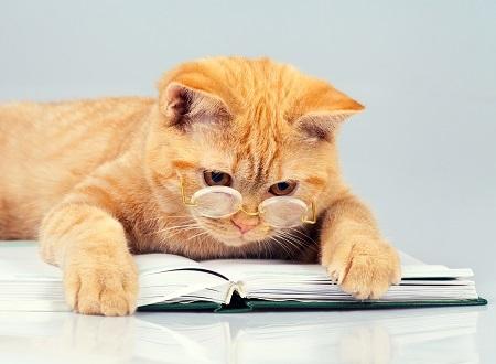 彼は何を熱心に読んでるのでしょうか?まだ名前はない!