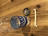 子供が海で骨を拾ってきたのですが、、、これは何の骨ですか?人骨っぽくて怖いです