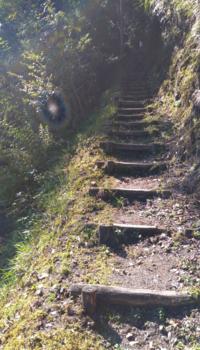 変な写真が撮れました。 場所は和歌山某所です。 この光は何でしょうか?