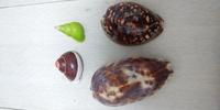 貝殻の種類が教えて欲しいです!