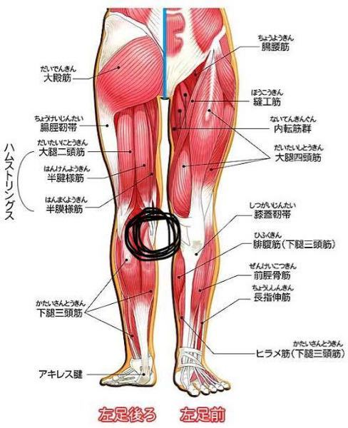 股関節のストレッチをしていると、両脚とも画像のようなところが伸びて痛みます。 これはやり方が悪いとかですか? 一応動画を見てそれ通りにやってるんですけど。