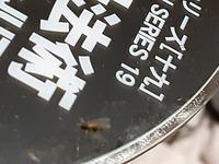 LEDにアリが群がっているのですが白アリでしょうか? 大きさは2mmぐらいで殺虫剤ですぐに死にます。