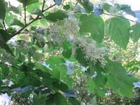 花の咲いている木の名前を教えて下さい。葉はこの植物なのか分かりません。