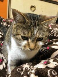 YouTubeの猫動画どれも可愛すぎて金取れてズルいよなー?(。・ω・。) うちの保護猫ポン太郎は金取れないなー( ˙-˙ )