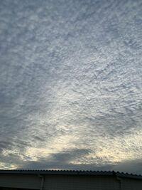 これはうろこ雲ですか? 地震雲…でしょうか?