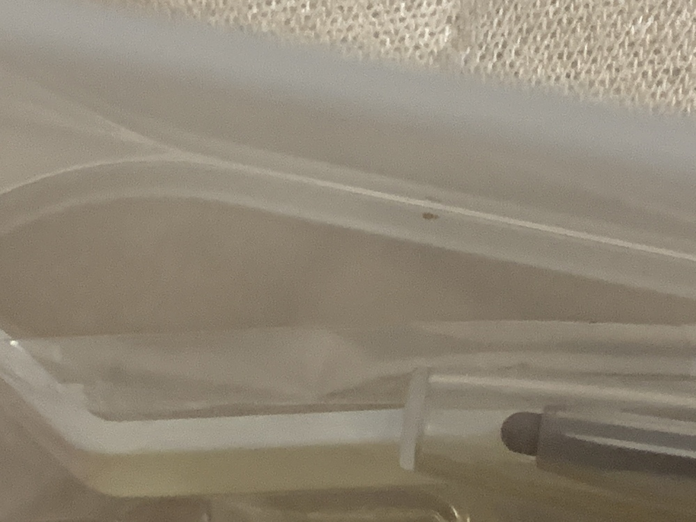 無印で購入したプラスチックのケースに化粧品を収納しているのですが、底に白っぽい小さな虫がいたのですが、これは何でしょうか?? 化粧品が原因なのか、それともプラスチックについているようなものなのか...