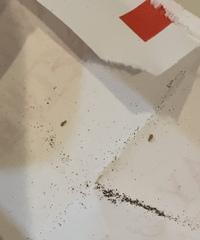 紅茶のティーパックに虫がいたのですが何という虫か分かりますか? 気づかずに飲んでました泣