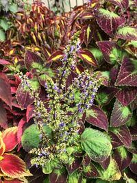 添付画像の花、植物の名前を教えて下さい。本日撮影大阪です。