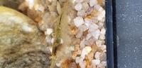 ミナミヌマエビですが、最近飼ったばかりなのでよくわからないのですが、これはメスでみどりのは卵巣ですか?白いのは受精したのですか? 今はこの状態でモリモリ餌、苔食べてます。