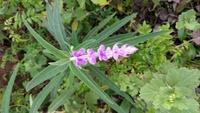 武蔵野の草むらで見つけたこの花の名前をご存じの方、教えて下さい。