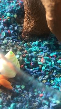 カラーサンドでガジュマルを育てておりますが、ここ数日、砂の上と根っこに白い繊維のようなものが付いています。 これはカビ?でしょうか??