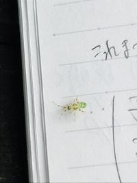 この虫の種類を知りたいです。 公園で勉強中に出会いました。ちょっと派手で面白い見た目だなぁと思ったのですが、うまく調べられず(配色が表現しづらい)名前が特定できません…。 顔は小さく後ろ足が大きめ、腹...