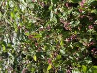 この花は何という名前でしょうか。 植物園の桜の木の下、地面いっぱいに咲いていました。とても可愛いらしい花ですが、どこにも札がなく、名前を知りたいと思いました。調べてみましたが、ネメシア、、でしょうか...