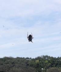 クモの種類が知りたいです。  家の近くに巣を張った500円玉程の大きさの、黒いクモがいたのですが。 画像のクモの種類はなんでしょうか。 オニグモのような気がするのですが… 巣も半径1m程の大きさです。  蜘蛛 くも 虫
