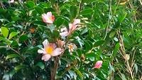 この花も、鬱蒼とした雑木林で咲いてました、花を教えて下さいm(__)m