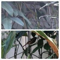鳥の種類  写真の鳥について 種類が分かる方、ご教示ください。  今週福岡県で撮影したものです。 画質が悪く分かりにくいと思います。2枚の写真は同一個体です。