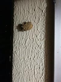 ベランダの壁に何かの巣? ベランダの壁に茶色っぽく、上に穴が開いている巣のようなものを見つけました。直径数センチという感じなんですが、これは何かの巣ですか?
