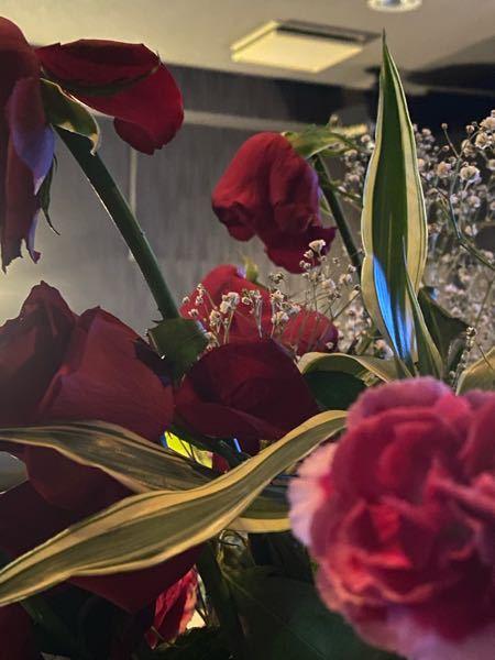 花屋さんお願いします 花束の薔薇が一晩で下むいてます ガーベラはダメになったのもあります 水揚げしてから花瓶にいれました また上を向かせられますか? いつもはみずみずしい霞草を入れる花屋なの...