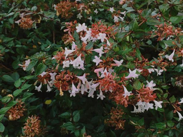 これは何の花ですか?