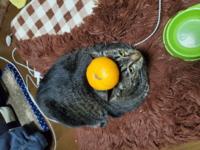 うちの猫は可愛いですか?