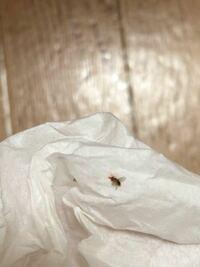 最近、家の中で同じ虫を数回見かけたのですが、ネットで調べてもよくわかりません…。 画質悪いですが、もしご存知の方がいらっしゃれば教えてもらえないでしょうか?